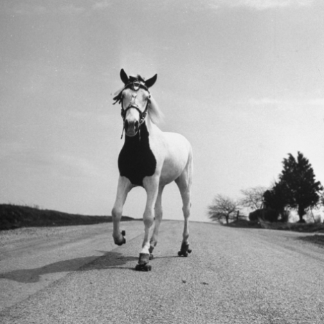 Rulluisutav hobune Jimmy