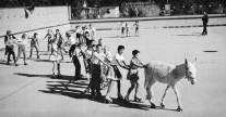 Pinky-donkey-roller-rink-children